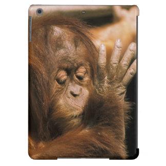 Borneo. Captive orangutan, or pongo pygmaeus. Case For iPad Air