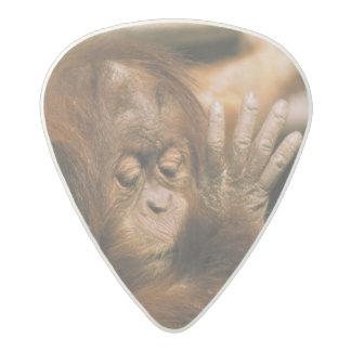 Borneo. Captive orangutan, or pongo pygmaeus. Acetal Guitar Pick