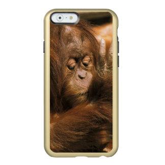 Borneo. Captive orangutan, or pongo pygmaeus. Incipio Feather® Shine iPhone 6 Case