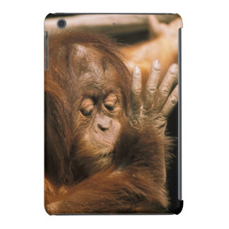 Borneo. Captive orangutan, or pongo pygmaeus. iPad Mini Retina Cases
