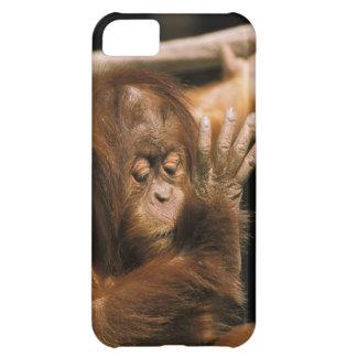 Borneo. Captive orangutan, or pongo pygmaeus. iPhone 5C Covers