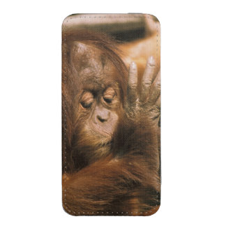 Borneo. Captive orangutan, or pongo pygmaeus. iPhone SE/5/5s/5c Pouch