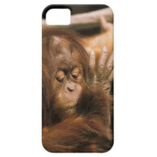 Borneo. Captive orangutan, or pongo pygmaeus. iPhone SE/5/5s Case