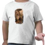 Borneo. Orangután prisionero, o pongo pygmaeus. Camiseta