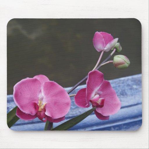 Borneo Orchids Mouse Pad