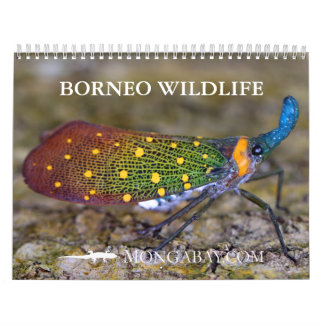 Borneo Rainforest Animals Calendar