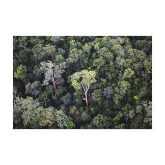 Borneo rainforest wall canvas