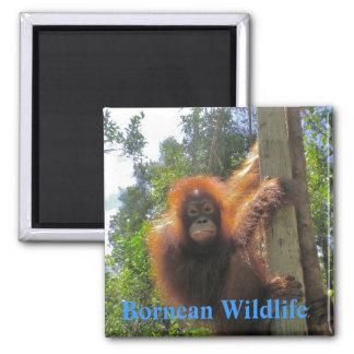 Borneo  Wildlife 2 Inch Square Magnet