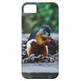 Borneo Wildlife Squirrel in Rainforest iPhone SE/5/5s Case