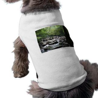 Borrachín, verde, pacífico prenda mascota