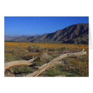 Borrego Springs Desert wildflowers Card