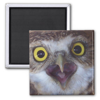 borrowing-owl-3 2 inch square magnet