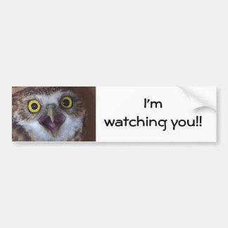 borrowing-owl- bumper sticker
