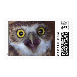 borrowing-owl- postage stamps