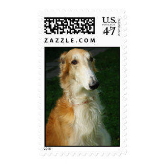 Borzoi dog beautiful photo postage stamp
