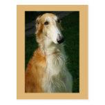 Borzoi dog beautiful photo postcard