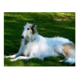 """Borzoi"" Dog Photography Postcard"