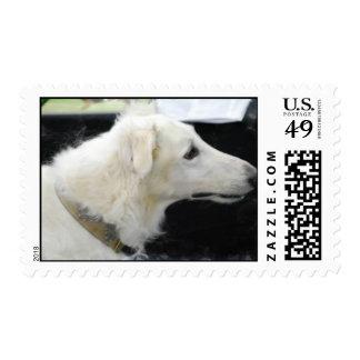 Borzoi  Postage Stamp