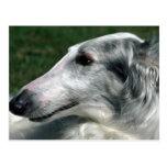 Borzoi, Russian Wolfhound Post Card