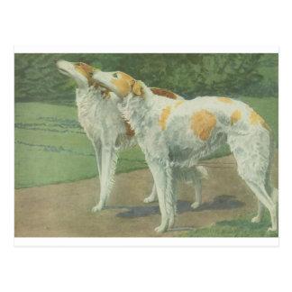 Borzoi (Wolfhound ruso) Postal