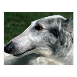 Borzoi, Wolfhound ruso Postal