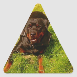 Bos de Davis Sullivan Pegatina Triangular