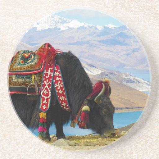 Bos Grunniens de los yacs cerca del lago Tíbet Yam Posavasos Cerveza