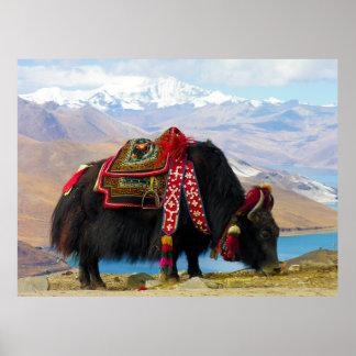 Bos Grunniens de los yacs cerca del lago Tíbet Yam Impresiones