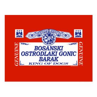 Bosanski Ostrodlaki Gonic Barak Postcard