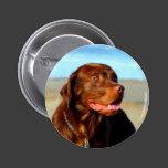 Bosco - Chocolate Labrador Art Pinback Button
