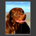Bosco - Chocolate Labrador Art Post Card