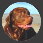 Bosco - Chocolate Labrador Art Round Stickers