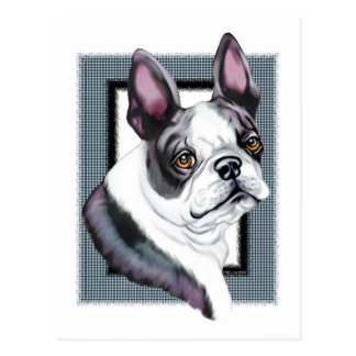 Boson Terrier Boston Style Postcard