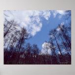 Bosque 15 póster