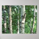 Bosque 5 póster