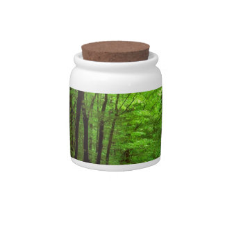 Bosque Allegheny Pennsylvania Platos Para Caramelos