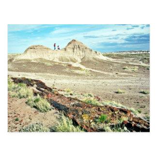 Bosque aterrorizado - parque nacional del desierto postales