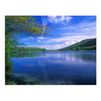 Bosque Berkshires del estado de la montaña de Postales