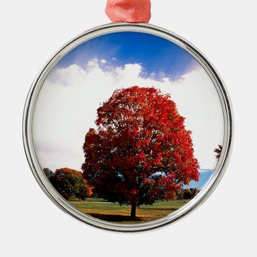 Bosque Clermont Kentucky del árbol de arce rojo Adorno Redondo Plateado