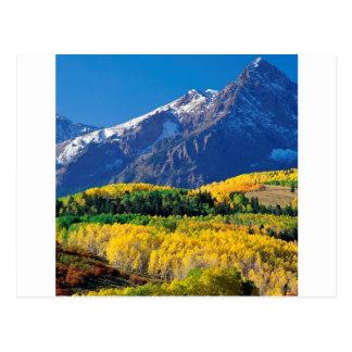 Bosque Colorado de Sneffels Uncompahgre del parque Tarjetas Postales