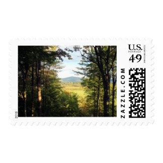 """Bosque con la opinión del """"ojo de la cerradura"""" de timbres postales"""