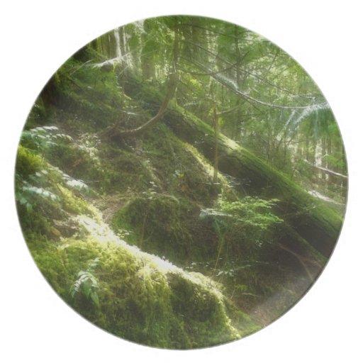 Bosque cubierto de musgo en placa de los Naturalez Platos Para Fiestas