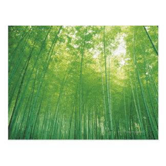 Bosque de bambú 2 tarjeta postal
