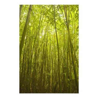 Bosque de bambú cerca del rastro de Waikamoi Ridge Fotografía