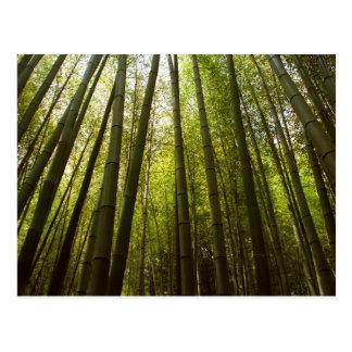 Bosque de bambú de Sagano Tarjetas Postales