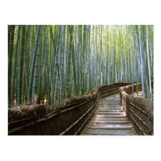 Bosque de bambú en Kyoto Tarjeta Postal
