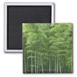 Bosque de bambú imán cuadrado