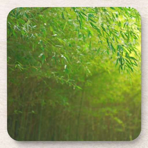 Bosque de bambú posavasos de bebidas