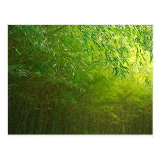 Bosque de bambú postales