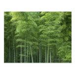 Bosque de bambú tarjeta postal